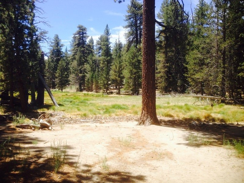 Trees in Mount San Jacinto State Park
